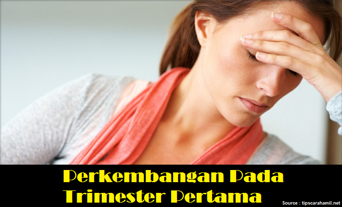 perkembangan gejala trimester pertama