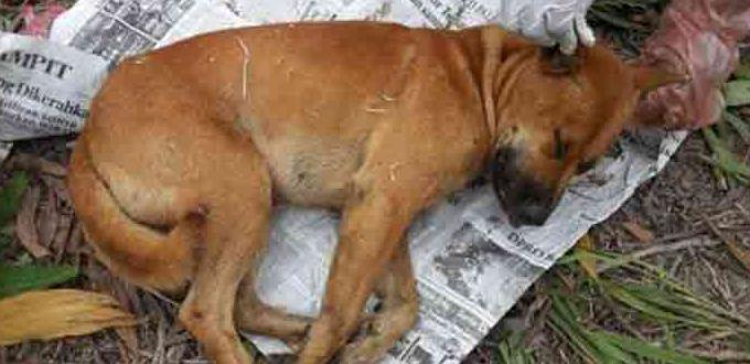 30+ Ciri ciri anjing rabies pada anjing terbaru