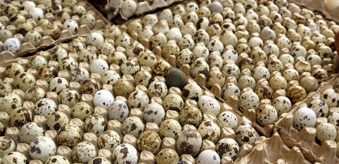 Manfaat Kuning Telur untuk Tubuh kita